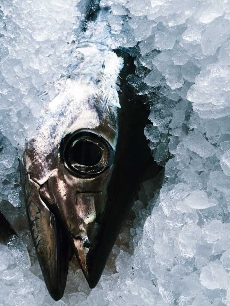 Tuna on ice